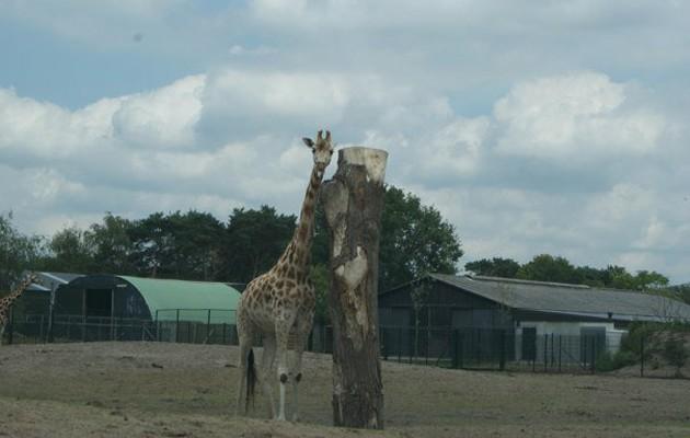 Nederland, Beekse Bergen, attractieparken, dieren, speeltuin, zwembad