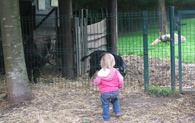dilbeek,boerderij,dieren,hoevewinkel